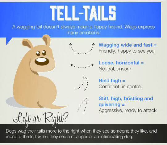 Why dogs wag their tails infographic